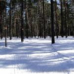 Серенада солнечной долины – поход в Зеленогорск