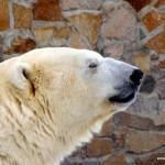 """Ледниковый Период – """"почти экстремальный"""" поход настоящих любителей, настоящей финской ходьбы :)"""