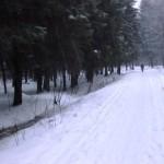 Выездная тренировка в Шуваловском парке 04.01.2013.