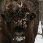 Нордик-тур 6 января. Маленькое путешествие в зимний лес.