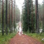 11 января, суббота, поход в Зеленогорске.
