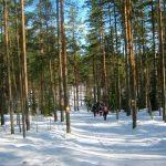 Снежная Серенада ждёт нордян 25 января, в субботу.