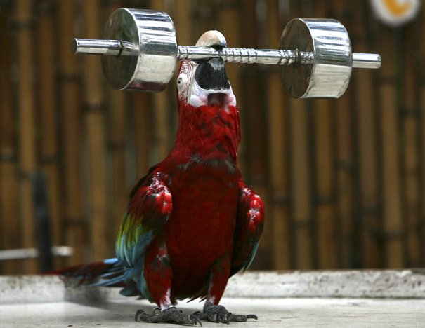 parrot_nanjing