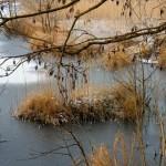 01 марта – По случаю Масленицы приглашаем в поход на Чёрные озёра