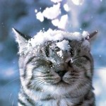 Опять снег!