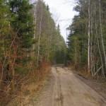 По весеннему маршруту 10 мая: от Дибунов до Тарховки