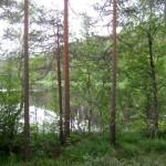 Проведём субботнюю тренировку 2 августа в Ольшаниках на озерах