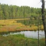 Зеленогорск приглашает 13 сентября на знакомый маршрут: болото Ламмин-Суо –Ленинское –и далее, по желанию, в Комарово.