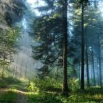 Скандинавская ходьба и прогулки на свежем воздухе очищают нашу Ауру.