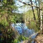 13 декабря, суббота. Зеленогорск. Известные и ещё неизвестные лесные дороги вокруг озёр Длинное и Красавица.