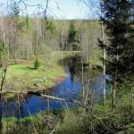 6 июня идем вдоль бесконечно петляющей речки Рощинки до Лидуловской рощи