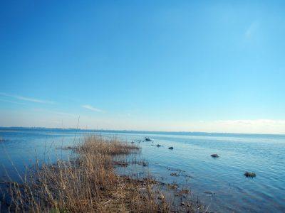 маркизова лужа. пейзаж