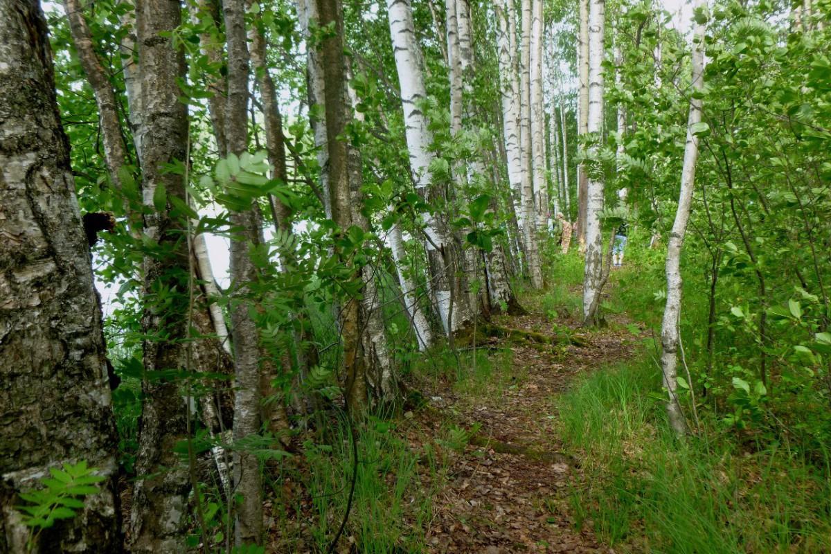 Северное Бутово - занятия/тренировки по скандинавской ходьбе