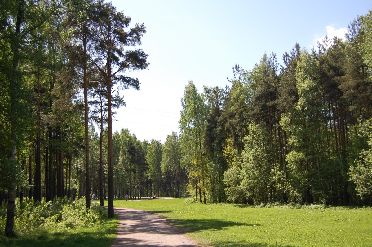 Занятия скандинавской ходьбой в Мартыновском сквере и парке Сосновка