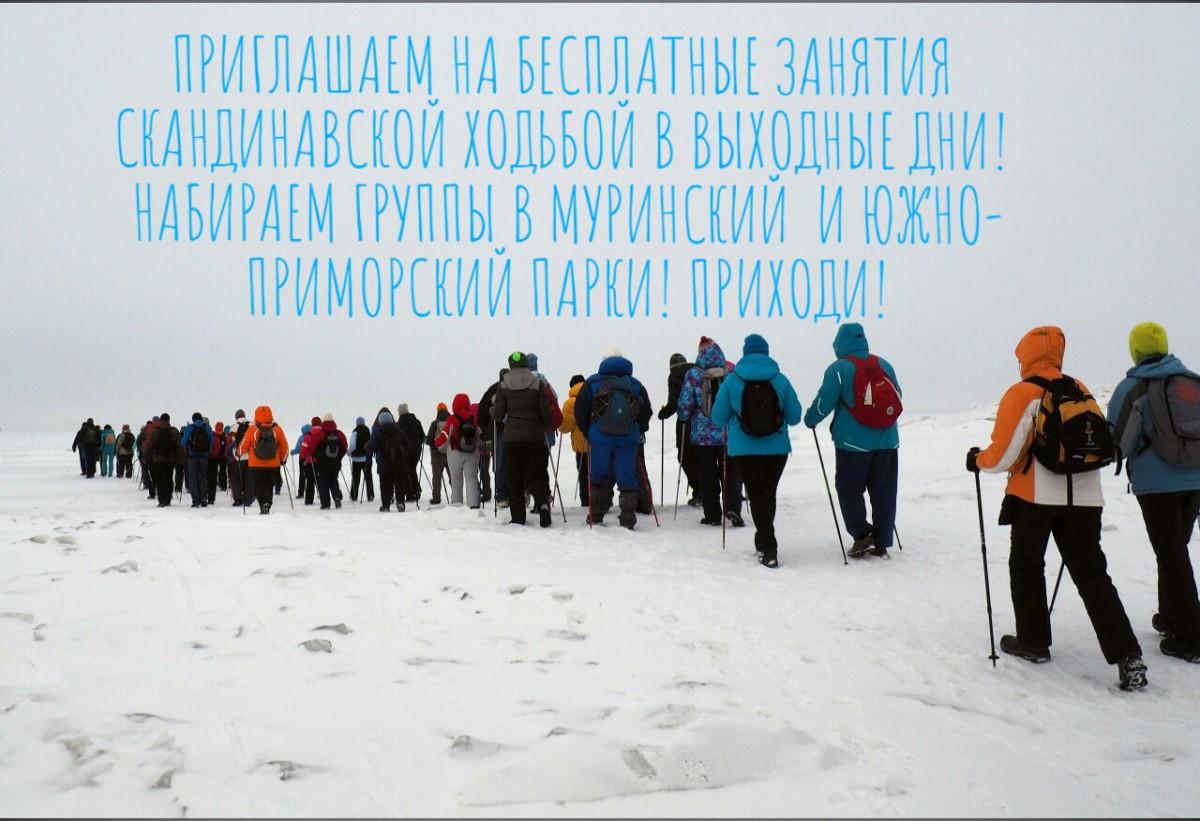 Набираем группы для занятий скандинавской ходьбой в Южно-Приморском и Муринском парках Санкт-Петербурга!